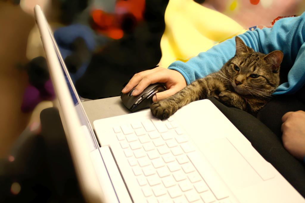 Cat and human using a computer mouse together.