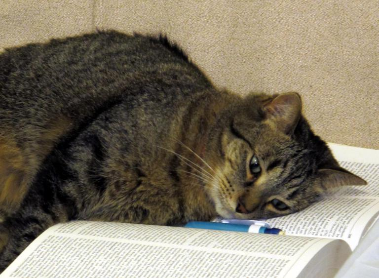 A cat collapsed from overwork and anxiety onto the pages of an open book.
